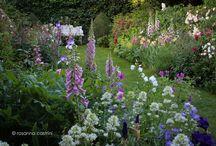 My own garden