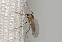 Atrapa mosquitos