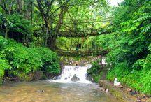 Living Root Bridges of Meghalaya, India