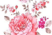 illust_flower