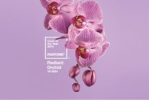 Pantone Color of the Year 2014 Radiant Orchid / The Christopher Knight Home Collection complimented by the  Panatone Color of the Year 2014, Radiant Orchid.