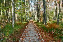 paths ,cesty a cesticky