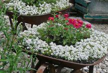 Virág és kert