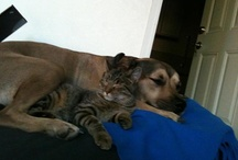 Dogs, Cats and Other Family Pets / Furry friends of all kinds for the animal lover in all of us!