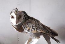 winged / by Patti Lounibos