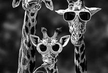 Animales jappigurizables / proximo objetivo... Hacer amigurimis de más animales..!! inspiración-->AQUÍ!