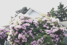 Cottage Gardens / A board devoted to the whimsical and natural designs of a cottage garden with overflowing plants, small vegetable gardens, and adorable little cottage houses.