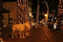 Christmas in Milano Marittima