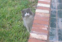 Cats looking alarmed / Cats looking alarmed