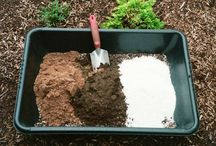 Gardening - succulants