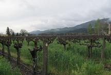 California Wine Country / Calistoga, Sonoma and Napa