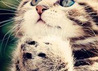 Kittens / Leuke katten plaatjes