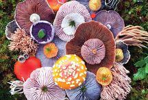 Mushroom a lá Marvellous