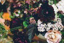 Autumn Equinox / Flowers