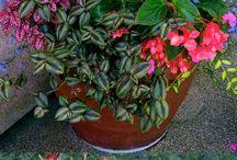 skupiny květin