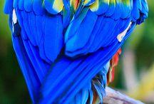 Parrots for Ed / Parrots