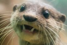 Otters <3