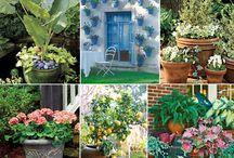 Gardening stuff / by Bonnie Rodriguez