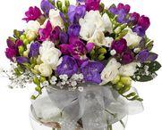 Ankara çiçek gönder / Çiçek vitrini ile 29 Tl ye Ankara çiçek gönderimi yapabilirsiniz. Ankara için çiçek siparişi vermek istiyorsanız, Ankara çiçek siparişi kategori sayfamızı ziyaret ediniz. http://www.cicekvitrini.com/cicekler/ankara-cicek-gonder