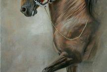 At resimleri