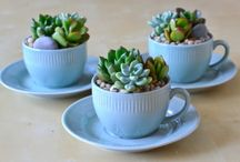 Tea Cup Planters / Flowers and Tea Cups!