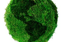 Going Green / Tips on how to make some easy changes to start living green / by WeWOOD USA