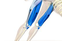 Fascia, Anatomy, Stretching, Trigger Points