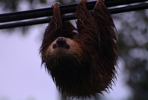 COSTA RICA WILDLIFE / by Tico Times Directory