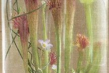 Glass Gardens & arrangements