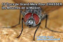 Anti-Mouches / Nos meilleures astuces et remèdes naturels pour lutter contre les mouches.