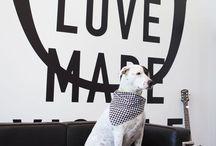 Inspiration: Corporate Dog