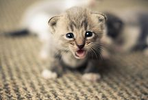 The Cuties / Cute animals