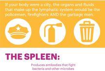 Spleen health