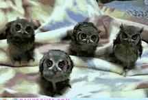 Sowy/owls