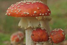 Fungi - Houby