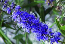 naturo / plantes, santé, naturopathie, bien être