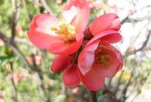 Primavera in my garden