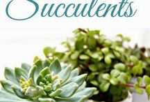 Succulents / by Marilena Peterson