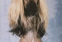 Konstiga hundar