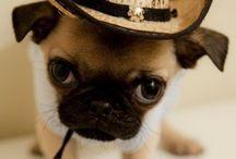 Doggies & Kitties