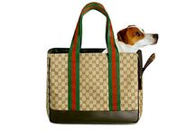 Feline Fashionistas & Canine Couture / Fancy pants items for four-legged friends