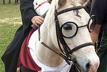 Horse fancy dress