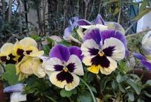 Gardening  / by Garden Tailors