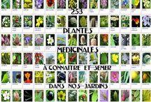 plante médical