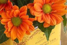 Ballagásra virágok