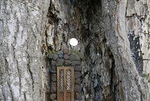 Asumus puussa