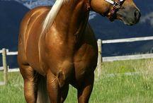 meus cavalos