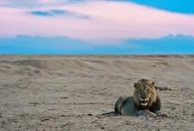 wild animals / by Heather Horgan