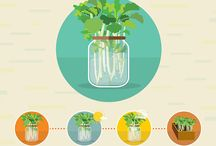 Growing vegetables / Growing from seed, scraps and plug plants