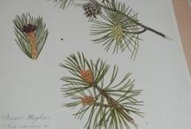 @McrMuseum Herbarium